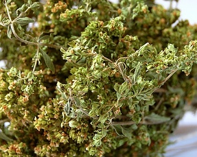 Oregano to Protect Against Meddling 50grms